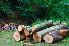 Wiązka powalać drzewa obrazy stock