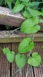 Wiązka powojów liście spada na drewnianym footbridge pokrzywy i zdjęcia stock