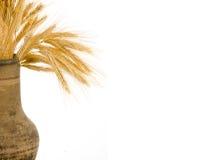 Wiązka pszeniczni ucho obrazy royalty free