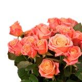 Wiązka róże Obraz Stock