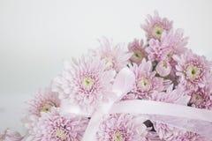 Wiązka Różowi chryzantema kwiaty z tasiemkowym łękiem Fotografia Stock