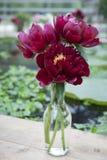 Wiązka różowy Sarah bernhardt ciie out peonie w turkusowej szklanej butelce na białym drewnianym stole Fotografia Stock