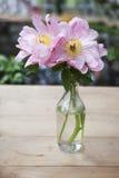 Wiązka różowy Sarah bernhardt ciie out peonie w turkusowej szklanej butelce na białym drewnianym stole Fotografia Royalty Free