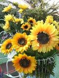 Wiązka słonecznik Obraz Royalty Free