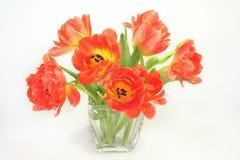 wiązka tulipany obraz royalty free