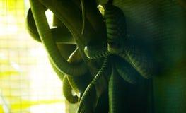 Wiązka węże obrazy stock