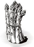 Wiązka wiążąca asparagus ilustracji