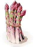 Wiązka wiążąca asparagus Fotografia Royalty Free