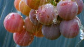 Wiązka winogrona w deszczu zdjęcie wideo