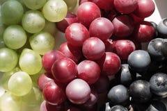 Wiązka winogrona w górę białego tła dalej, miejsce dla teksta zdjęcie stock