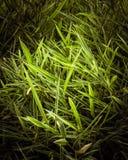 Wiązka zieleni bambusowi liście fotografia royalty free