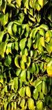 Wiązka Zieleni liście w pustynnym terenie obrazy royalty free