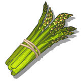 Wiązka zielony asparagus na białym tle royalty ilustracja
