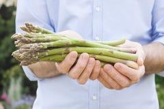 Wiązka zielony asparagus w ogrodniczek rękach zamyka up obrazy stock