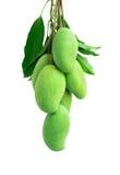 Wiązka zielony mango na białym tle Obraz Stock