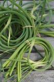 Wiązki świeżo ukradziony czosnku głąbik przy rolnikami wprowadzać na rynek fotografia royalty free