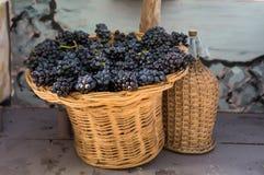 Wiązki czerwoni winogrona w łozinowym koszu carboy i obrazy stock