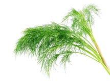 Wiązki koperkowy ziele na białym tle Zdjęcia Stock