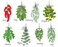 Wiązki leczniczy aromatyczni ziele ilustracja wektor