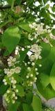 Wiązki mali biali kwiaty przeciw tłu jaskrawy - zielony ulistnienie Delikatnego lata romantyczny tło obrazy royalty free