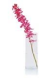 wiązki orchidei czerwień Zdjęcia Royalty Free