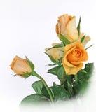wiązki róż kolor żółty Obrazy Royalty Free