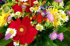 wiązki różnych kwiatów świeży ogród Fotografia Royalty Free