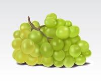 wiązki winogron zieleń Obraz Royalty Free