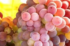 Wiązki winogrona zdjęcie stock