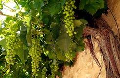 Wiązki winogrona w ulicie fotografia stock
