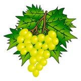 wiązki winogrono ilustracji
