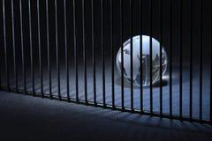 więźniarski świat Fotografia Stock