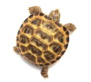 więcej tła mojego portfolio widzi żółwia white Fotografia Stock