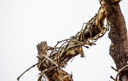 Więdnąć winorośle obraz stock