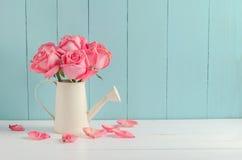 Więdnąca menchii róża kwitnie przy podlewanie puszką Obrazy Royalty Free