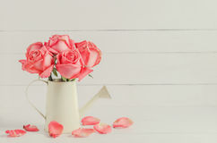 Więdnąca menchii róża kwitnie przy podlewanie puszką, rocznik wzrastał Obrazy Stock