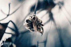 Więdnąca roślina Fotografia Stock