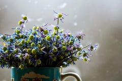 Więdnący anemony na szarym tle obrazy royalty free