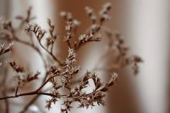 Więdnący bukiet z małego bielu suchymi kwiatami up i gałąź przeciw beż ściany zakończeniu Obraz Stock