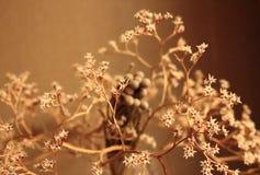 Więdnący bukiet z małego bielu suchymi kwiatami up i gałąź przeciw beż ściany zakończeniu Fotografia Royalty Free