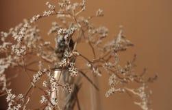 Więdnący bukiet z małego bielu suchymi kwiatami up i gałąź w szklanej wazie przeciw beż ściany zakończeniu Obraz Stock