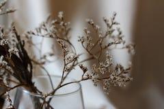 Więdnący bukiet z małego bielu suchymi kwiatami up i gałąź w szklanej wazie przeciw beż ściany zakończeniu Fotografia Royalty Free
