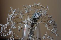 Więdnący bukiet z małego bielu suchymi kwiatami up i gałąź w szklanej wazie przeciw beż ściany zakończeniu Fotografia Stock