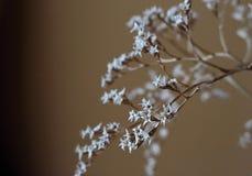 Więdnący bukiet z małego bielu suchymi kwiatami up i gałąź w szklanym wazy zakończeniu Zdjęcie Royalty Free