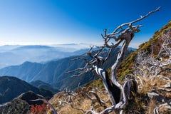 Więdnący drzewa wokoło Syue gór, Tajwan Obraz Stock