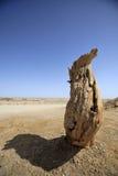 Więdnący Populus diversifolia Zdjęcia Royalty Free