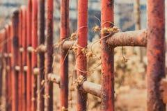Więdnący winogrady Zdjęcie Royalty Free