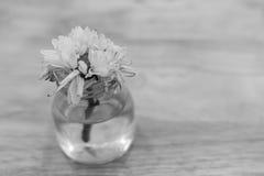 Więdnie białego kwiatu Zdjęcie Stock