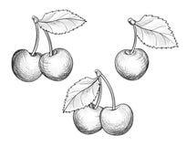 Wiśni gałąź set Ręka rysująca jagoda Fesh owocowy nakreślenie Zdjęcia Royalty Free