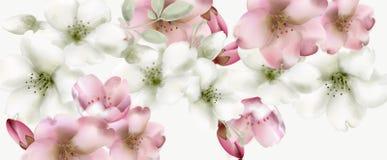 Wiśnia kwitnie akwarela wektor Delikatni wiosny okwitnięcia tła royalty ilustracja